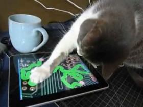 Dalla pappa all'iPad per gatti: il caso Friskies